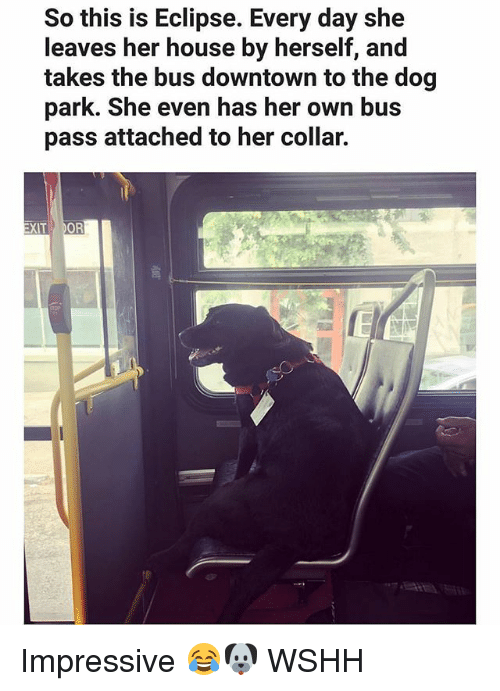 Memes, Wshh, and Eclipse: So this is Eclipse. Every day she  leaves her house by herself, and  takes the bus downtown to the dog  park. She even has her own bus  pass attached to her collar.  XIT  OR Impressive 😂🐶 WSHH