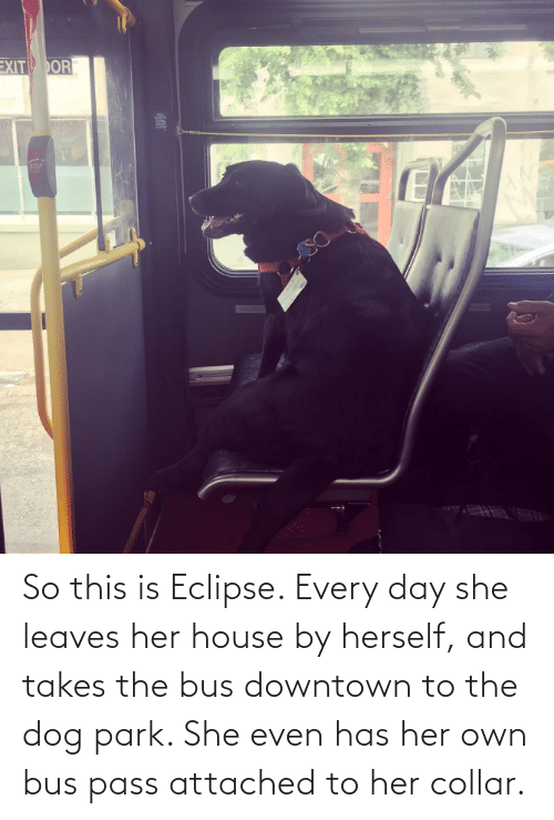 park: So this is Eclipse. Every day she leaves her house by herself, and takes the bus downtown to the dog park. She even has her own bus pass attached to her collar.
