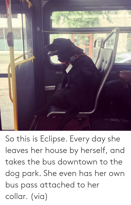 House: So this is Eclipse. Every day she leaves her house by herself, and takes the bus downtown to the dog park. She even has her own bus pass attached to her collar. (via)