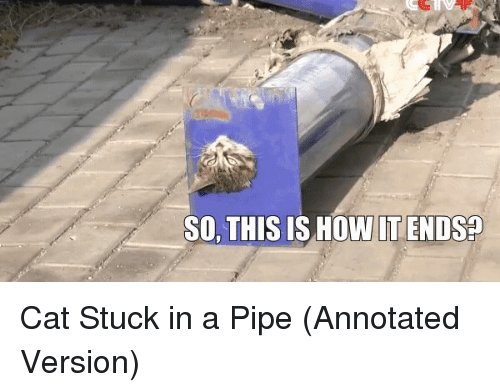 So This Is How It Ends: SO, THIS IS HOW IT ENDS Cat Stuck in a Pipe (Annotated Version)