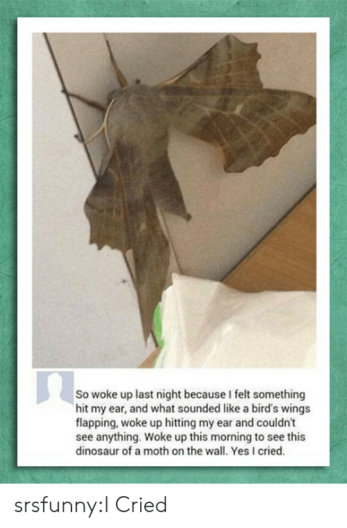 flapping: So woke up last night because I felt something  hit my ear, and what sounded like a bird's wings  flapping, woke up hitting my ear and couldn't  see anything. Woke up this morning to see this  dinosaur of a moth on the wall. Yes I cried. srsfunny:I Cried