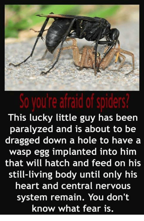 Afraid Of Spiders: So you're afraid of spiders?  This lucky little guy has been  paralyzed and is about to be  dragged down a hole to have a  wasp egg implanted into  him  that will hatch and feed on his  still-living body until only his  heart and central nervous  system remain. You don't  know what fear is.
