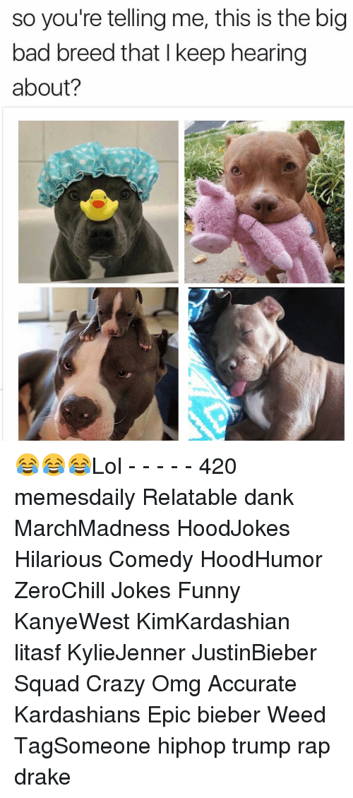 Your Telling Me: so you're telling me, this is the big  bad breed that keep hearing  about? 😂😂😂Lol - - - - - 420 memesdaily Relatable dank MarchMadness HoodJokes Hilarious Comedy HoodHumor ZeroChill Jokes Funny KanyeWest KimKardashian litasf KylieJenner JustinBieber Squad Crazy Omg Accurate Kardashians Epic bieber Weed TagSomeone hiphop trump rap drake