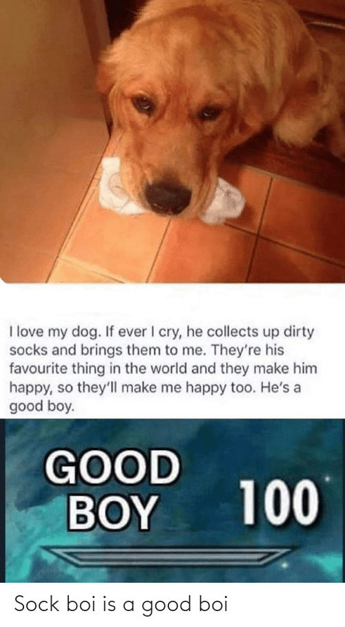 Sock: Sock boi is a good boi