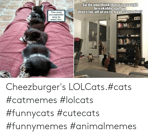 LOLcats: Sodo you think there's enough  breakablestuff in  there for all ofus to have some fun?  The only  acceptable  way to  wear fur. Cheezburger's LOLCats.#cats #catmemes #lolcats #funnycats #cutecats #funnymemes #animalmemes