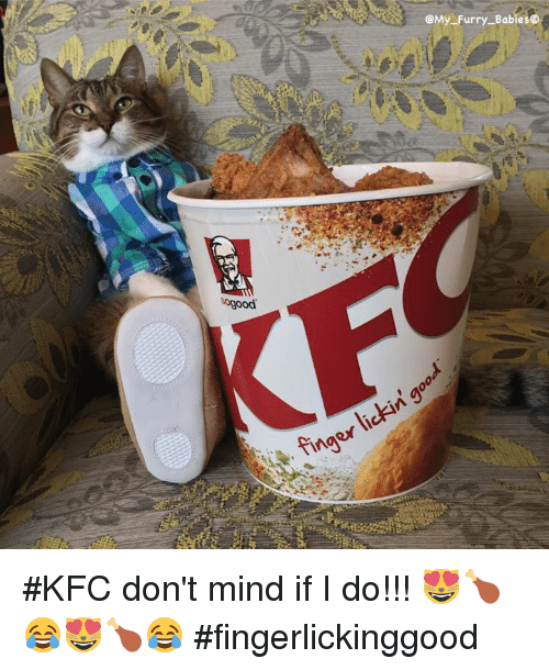 Baby, It's Cold Outside: sogood  My Furry Babies  lickin  finger #KFC don't mind if I do!!! 😻🍗😂😻🍗😂 #fingerlickinggood