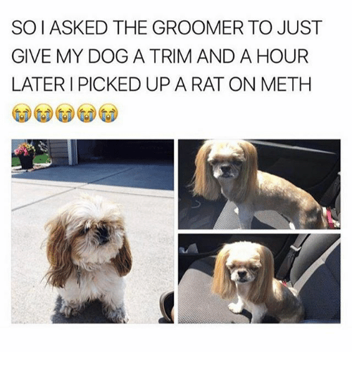 Groomers: SOIASKED THE GROOMER TO JUST  GIVE MY DOG A TRIM AND A HOUR  LATER I PICKED UP A RAT ON METH