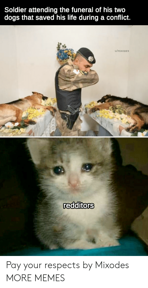 soldier: Soldier attending the funeral of his two  dogs that saved his life during a conflict.  u/MIXODES  redditors Pay your respects by Mixodes MORE MEMES