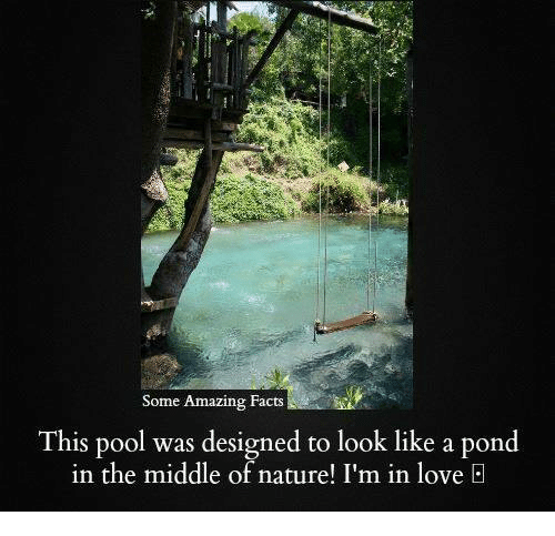 amazing facts: Some Amazing acts  Some Amazing Facts  This pool was designed to look like a pond  in the middle of nature! I'm in love