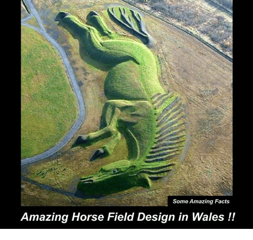 Some Amazing Facts Amazing Horse Field Design in Wales | Facts ...