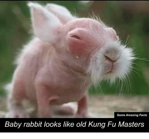kung fu master: Some Amazing Facts  Baby rabbit looks like old Kung Fu Masters