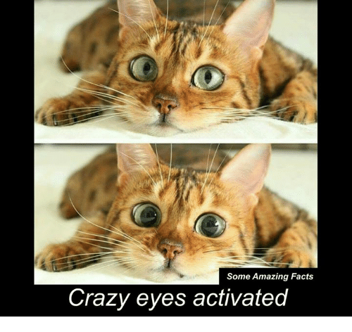 crazy eyes: Some Amazing Facts  Crazy eyes activated