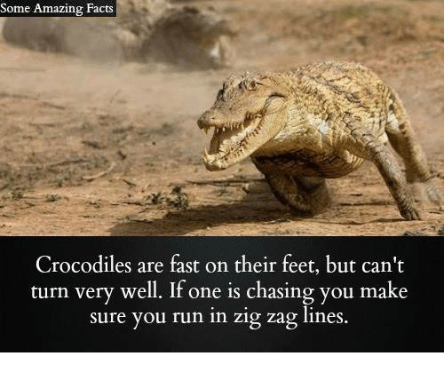 Facts, Memes, and Run: Some Amazing Facts  Crocodiles are fast on their feet, but can't  turn very well. If one is chasing you make  sure you run in zig zag lines.