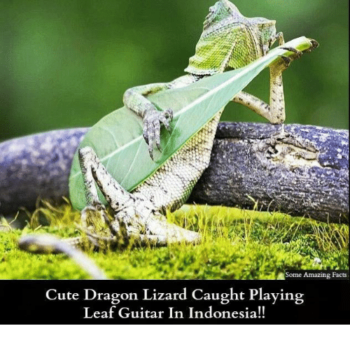 amazing facts: Some Amazing Facts  Cute Dragon Lizard Caught Playing  Leaf Guitar In Indonesia!!