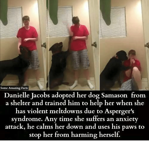 amazing facts: Some Amazing Facts  Danielle Jacobs adopted her dog Samason from  a shelter and trained him to help her when she  has violent meltdowns due to Asperger's  syndrome. Any time she suffers an anxiety  attack, he calms her down and uses his paws to  stop her from harming herself.