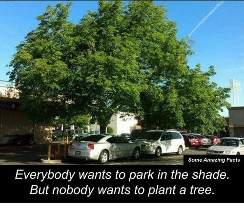 memes: Some Amazing Facts  Everybody wants to park in the shade.  But nobody wants to plant a tree.
