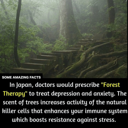 """Depression And Anxiety: SOME AMAZING FACTS  In Japan, doctors would prescribe """"Forest  Therapy"""" to treat depression and anxiety. The  scent of trees increases activity of the natural  killer cells that enhances your immune system  which boosts resistance against stress."""