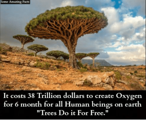 """Facts, Memes, and Earth: Some Amazing Facts  It costs 38 Trillion dollars to create Oxygen  for 6 month for all Human beings on earth  """"Trees Do it For Free."""""""