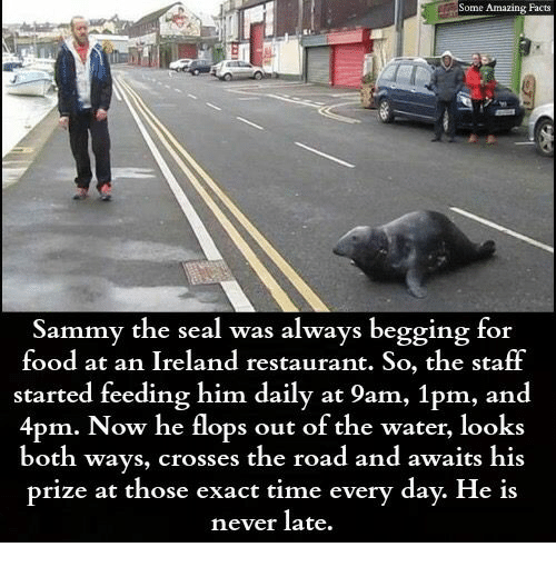 amazing facts: Some Amazing Facts  Sammy the seal was always begging for  food at an Ireland restaurant. So, the staff  started feeding him daily at 9am, 1pm, and  4pm. Now he flops out of the water, looks  both ways, crosses the road and awaits his  prize at those exact time every day. He is  never late.