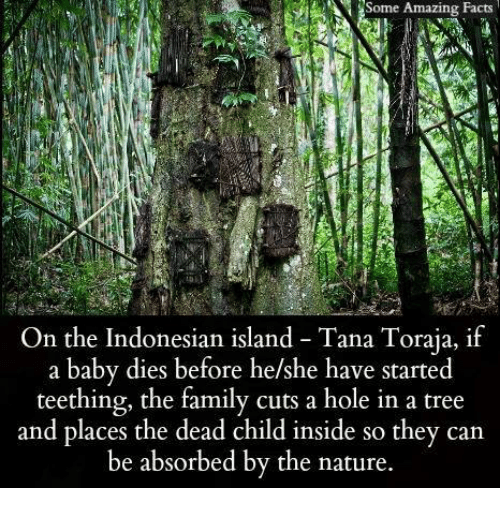 Facts, Family, and Memes: Some Amazing Facts  Some Amazing Facts  On the Indonesian island Tana Toraja, if  a baby dies before he/she have started  teething, the family cuts a hole in a tree  and places the dead child inside so they can  be absorbed by the nature.