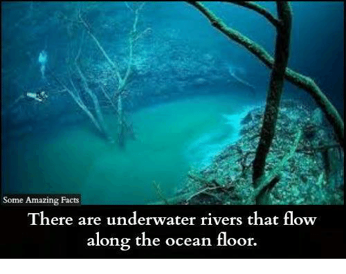 Facts, Memes, and Ocean: Some Amazing Facts There are underwater rivers that flow along the ocean floor.