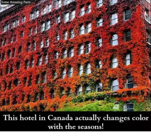 amazing facts: Some Amazing Facts  This hotel in Canada actually changes color  with the seasons!