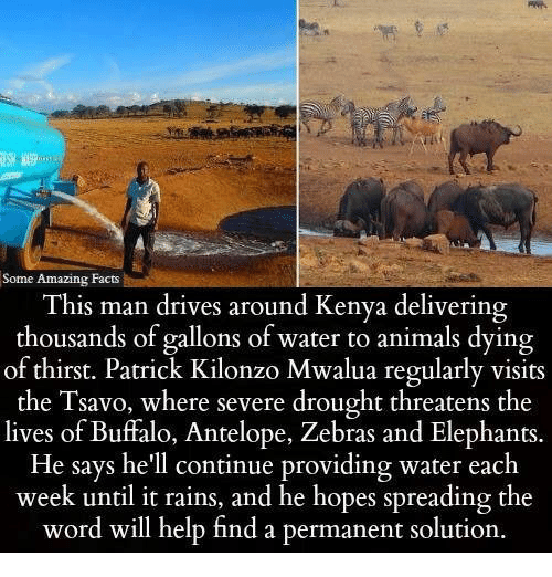 Animals, Facts, and Memes: Some Amazing Facts  This man drives around Kenya delivering  thousands of gallons of water to animals dying  of thirst. Patrick Kilonzo Mwalua regularly visits  the Tsavo, where severe drought threatens the  lives of Buffalo, Antelope, Zebras and Elephants.  He says he'll continue providing water each  week until it rains, and he hopes spreading the  word will help find a permanent solution.