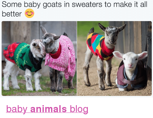 """Baby Goats: Some baby goats in sweaters to make it all  bettero <p><a href=""""http://babyanimalgifs.tumblr.com/"""" target=""""_blank"""">baby <b>animals</b> blog</a></p>"""