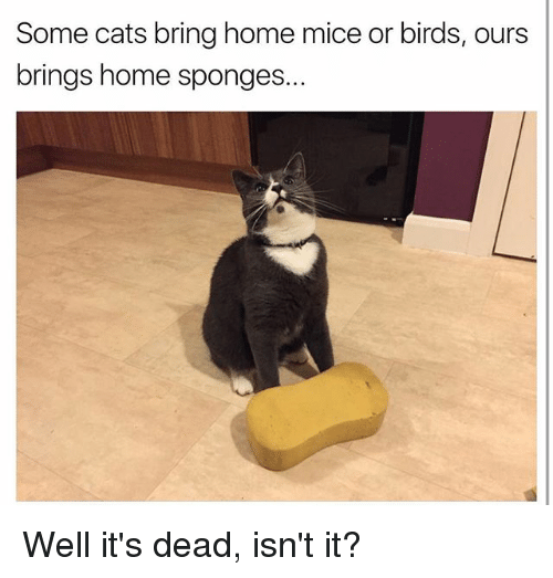 How To Stop Cats Bringing In Mice And Birds