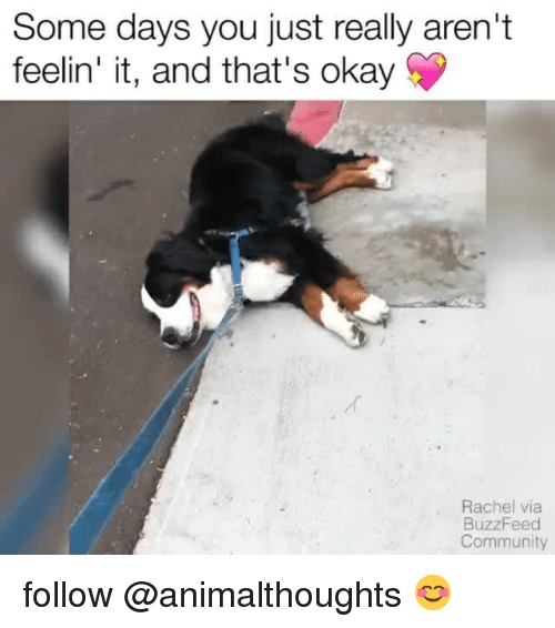 Community, Buzzfeed, and Okay: Some days you just really aren't  feelin' it, and that's okay  Rachel via  BuzzFeed  Community follow @animalthoughts 😊