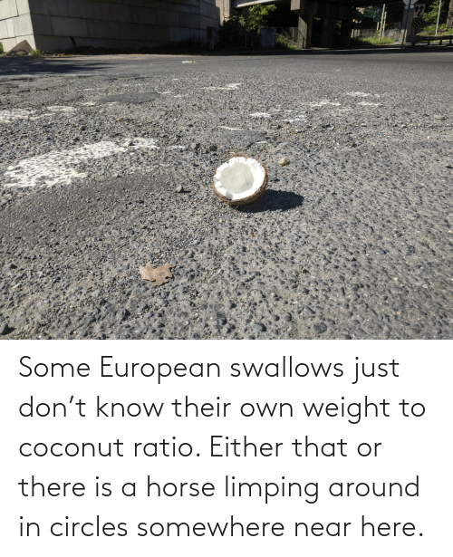 Horse: Some European swallows just don't know their own weight to coconut ratio. Either that or there is a horse limping around in circles somewhere near here.