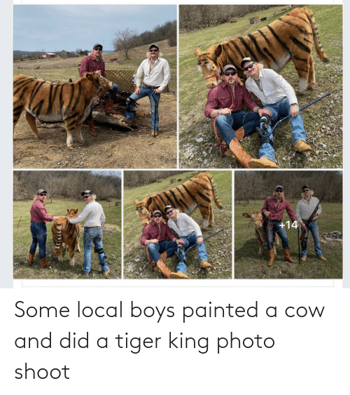 shoot: Some local boys painted a cow and did a tiger king photo shoot