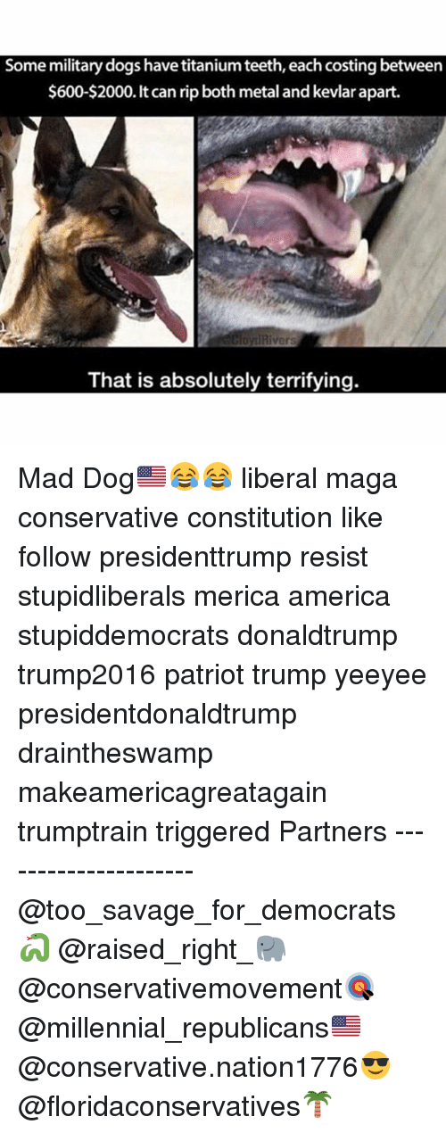 America, Dogs, and Memes: Some military dogs have titanium teeth, each costing between  $600-$2000. can rip both metal and kevlarapart.  That is absolutely terrifying. Mad Dog🇺🇸😂😂 liberal maga conservative constitution like follow presidenttrump resist stupidliberals merica america stupiddemocrats donaldtrump trump2016 patriot trump yeeyee presidentdonaldtrump draintheswamp makeamericagreatagain trumptrain triggered Partners --------------------- @too_savage_for_democrats🐍 @raised_right_🐘 @conservativemovement🎯 @millennial_republicans🇺🇸 @conservative.nation1776😎 @floridaconservatives🌴