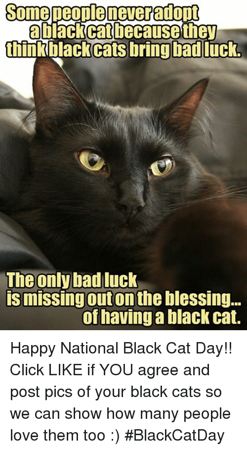 25 Best Memes About Cat Happy Cat Happy Memes