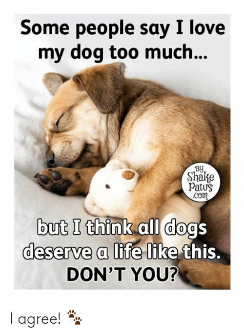 all dogs: Some people say I love  my dog too much...  BY  Shake  Paws  .Com  but I think all dogs  deserve a life like this.  DON'T YOU? I agree! 🐾