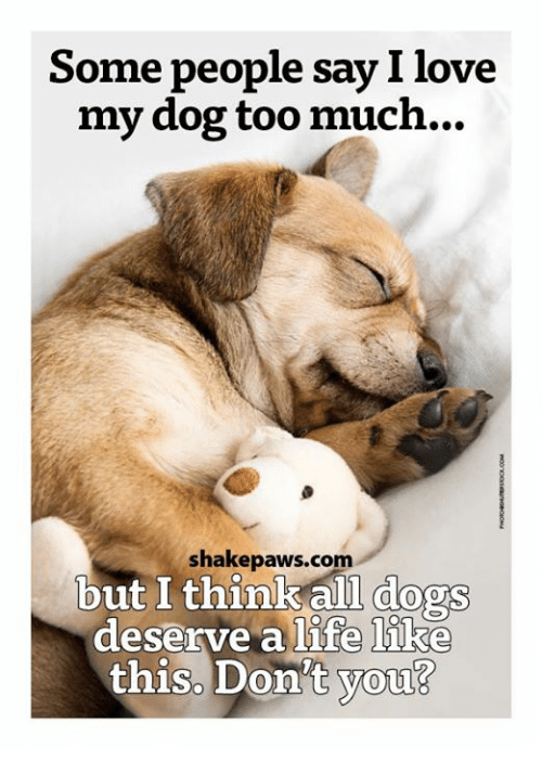 Memes, Too Much, and 🤖: Some people say I love  my dog too much...  shake paws.com  but I think all dogs  deserve a life like  this. Don't you?