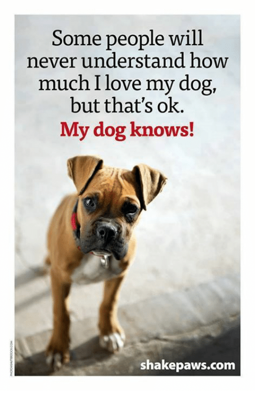 love my dogs: Some people will  never understand how  much I love my dog,  but that's ok.  My dog knows!  shake paws com