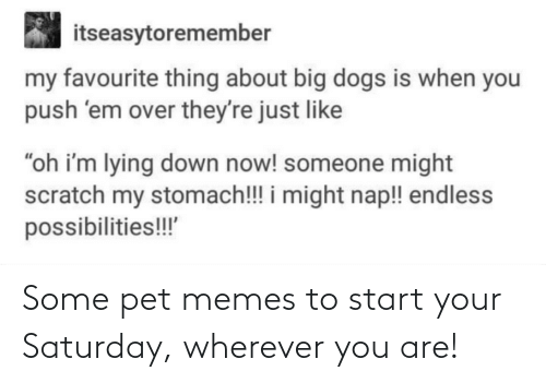 pet: Some pet memes to start your Saturday, wherever you are!