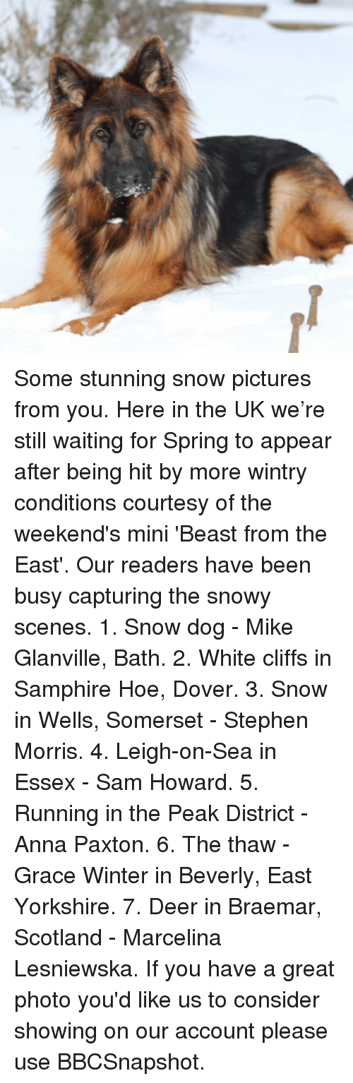 Anna, Deer, and Hoe: Some stunning snow pictures from you. Here in the UK we're still waiting for Spring to appear after being hit by more wintry conditions courtesy of the weekend's mini 'Beast from the East'. Our readers have been busy capturing the snowy scenes. 1. Snow dog - Mike Glanville, Bath. 2. White cliffs in Samphire Hoe, Dover. 3. Snow in Wells, Somerset - Stephen Morris. 4. Leigh-on-Sea in Essex - Sam Howard. 5. Running in the Peak District - Anna Paxton. 6. The thaw - Grace Winter in Beverly, East Yorkshire. 7. Deer in Braemar, Scotland - Marcelina Lesniewska. If you have a great photo you'd like us to consider showing on our account please use BBCSnapshot.