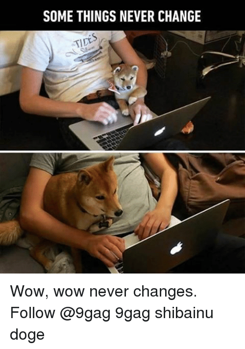 Dogee: SOME THINGS NEVER CHANGE  TIDE Wow, wow never changes. Follow @9gag 9gag shibainu doge