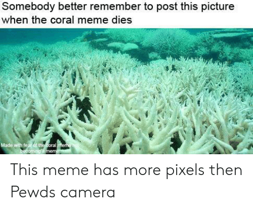 Coral Meme: Somebody better remember to post this picture  when the coral meme dies This meme has more pixels then Pewds camera