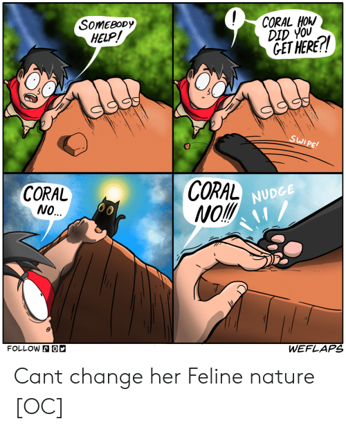 Nudge: SOMEBODy  HELP  CORAL HOW  DID YOU  GET HERE!  CORAL  NO.  CORAL  Mol  NUDGE  FOLLOWA  WEFLAPS Cant change her Feline nature [OC]
