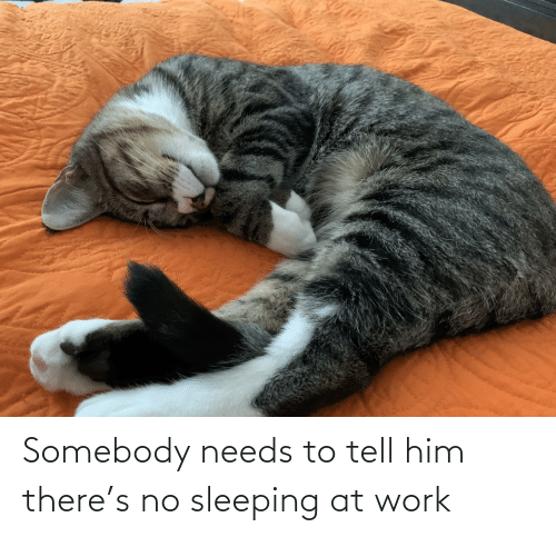sleeping at work: Somebody needs to tell him there's no sleeping at work