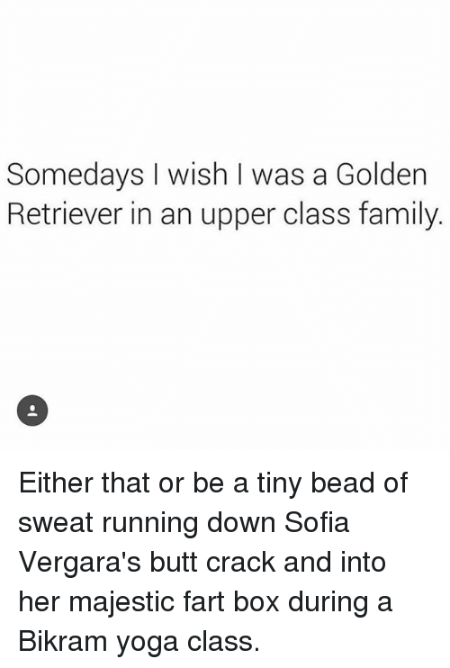 Upper Class Family: Somedays I wish I was a Golden  Retriever in an upper class family. Either that or be a tiny bead of sweat running down Sofia Vergara's butt crack and into her majestic fart box during a Bikram yoga class.