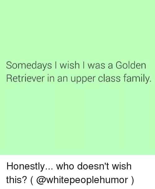 Upper Class Family: Somedays I wish I was a Golden  Retriever in an upper class family. Honestly... who doesn't wish this? ( @whitepeoplehumor )