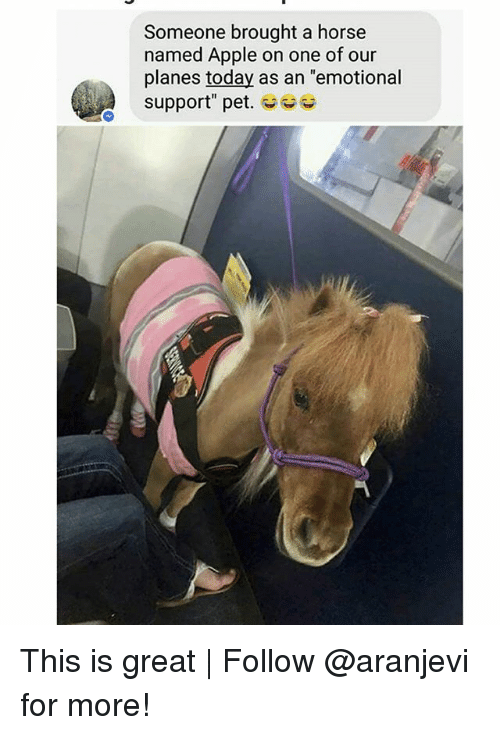 "Apple, Memes, and Horse: Someone brought a horse  named Apple on one of our  planes today as an ""emotional  support"" pet. This is great 