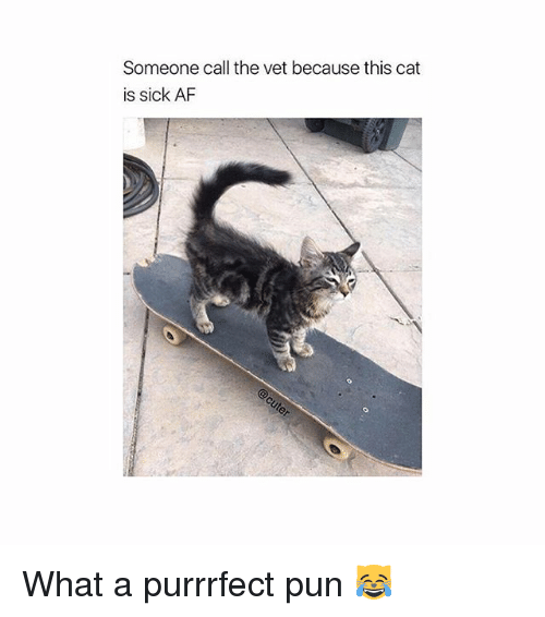 Punful: Someone call the vet because this cat  is sick AF What a purrrfect pun 😹