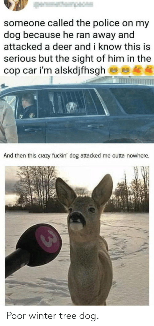 cop car: someone called the police on my  dog because he ran away and  attacked a deer and i know this is  serious but the sight of him in the  cop car i'm alskdjfhsgh  And then this crazy fuckin' dog attacked me outta nowhere. Poor winter tree dog.