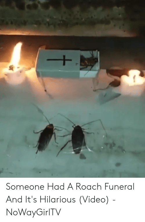 Roach Meme: Someone Had A Roach Funeral And It's Hilarious (Video) - NoWayGirlTV