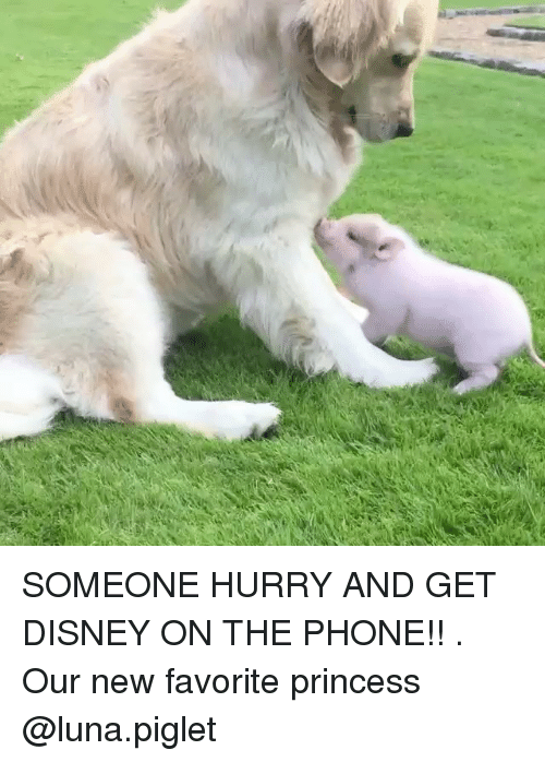 Disney, Memes, and Phone: SOMEONE HURRY AND GET DISNEY ON THE PHONE!! . Our new favorite princess @luna.piglet